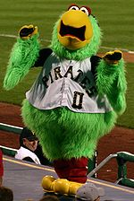 Pirate parrot pirates mascot.jpg