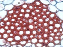 Amazoncom Constantia Beauty Natural Sea Silk Sponges for