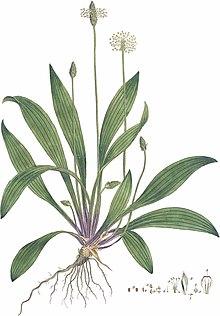 Plant Illustration Art