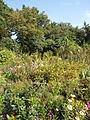 Poltava Botanical garden (02).jpg