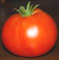 Pomidorchik.png