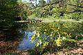 Pond - Institute for Nature Study, Tokyo - DSC02093.JPG