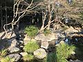 Pond of Miyazaki Central Park 5.jpg