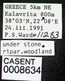Ponera coarctata casent0008634 label 1.jpg