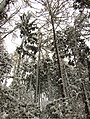 Praha, Kunratice, zasněžený Kunratický les IV.jpg