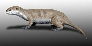 Pinniped - Restoration of Puijila darwini