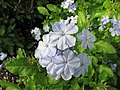 Queen Elizabeth Botanical Gardens 007.jpg