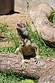Quinta Santo Inacio - Iguana.JPG