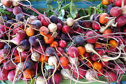Radishes 2 - Farmer's Market at the Ferry Building - San Francisco, CA - DSC03595.JPG