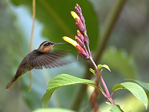 Humming - A hummingbird with flower
