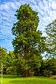 Redwood - panoramio (1).jpg