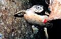 Reef2055 - Flickr - NOAA Photo Library.jpg