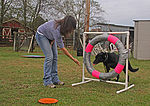 Retirement goes to the dogs 131017-A-UK859-764.jpg