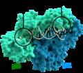 Reverse transcriptase 3KLF labels-es.png