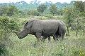 Rhino (393128688).jpg