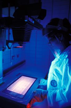 An IRRI researcher studying rice DNA under ultraviolet light.