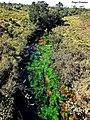 Rio Batalha Água Cristalina Algas Rochas Cerrado - panoramio.jpg
