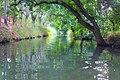 River Ciane.jpg