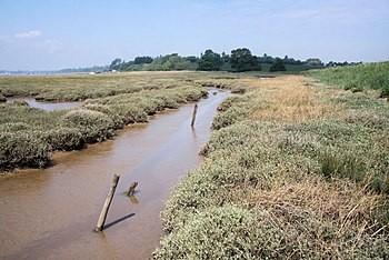 English: River Deben saltings Muddy creeks fil...