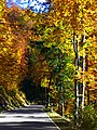 Road In Autumn Time - panoramio.jpg