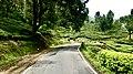 Road leading to Munnar from Kochi 2.jpg