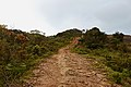Road leading to View point hill near Ayatana resort, Coorg.jpg