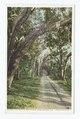 Road to New Smyrna, Daytona, Fla (NYPL b12647398-70019).tiff