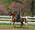 Rock Creek Spring Horse Show 2008 (2674577192).jpg