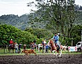 Rodeo Event Calf Roping 10.jpg