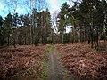 Rogate Common - geograph.org.uk - 1136062.jpg