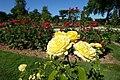 Rose garden @ Parc de Bagatelle @ Paris (28348785076).jpg