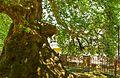 Rrapi Prizren4.jpg
