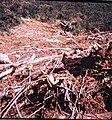 Rubble from avalanches. (50933917172).jpg