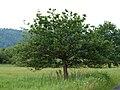 Ruggeller Riet-Oak-01ASD.jpg