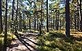 Södra Sandhamn, Skog.jpg