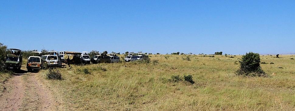 Safari-jam-in-Maasai-Mara