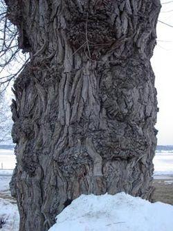 sveriges träd och buskar