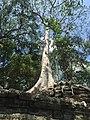 Sangkat Nokor Thum, Krong Siem Reap, Cambodia - panoramio (52).jpg