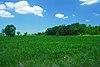 Scuppernong Prairie.jpg