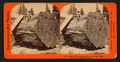 Section of the Original Big Tree - near view, Mammoth Grove, Calaveras County, by Lawrence & Houseworth.png