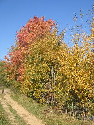 http://upload.wikimedia.org/wikipedia/commons/thumb/0/07/September.jpg/330px-September.jpg