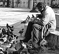Sharing the meal with the pigeons (3311560993).jpg