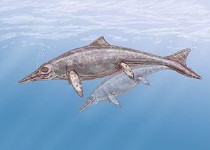 Lebensbild von Shastasaurus, einem Vertreter riesiger Ichthyosaurier aus der Trias