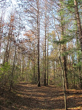 Shawme-Crowell State Forest, Sandwich MA.jpg