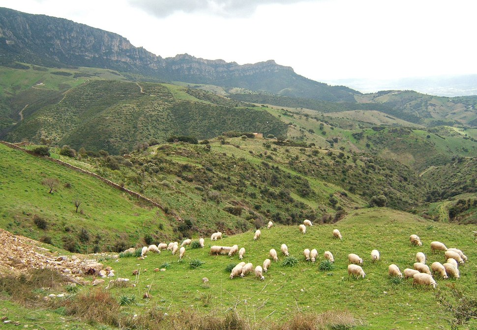 Sheep near lula sardinia
