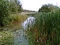 Shirebrook Nature Reserve - geograph.org.uk - 50349.jpg