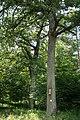 Silberne Eiche beide Bäume Schönberg-Fernitz.jpg