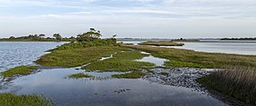 Sinepuxent Bay Assateague MD1.jpg