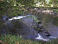 Small Waterfalls in the River Dart above New Bridge - geograph.org.uk - 1003458.jpg