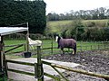 Small paddocks off Tyler Hill Road - geograph.org.uk - 751862.jpg